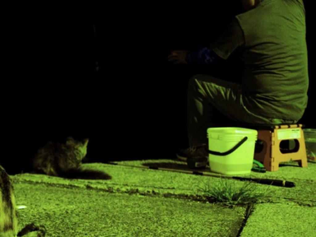 夜釣りしている様子
