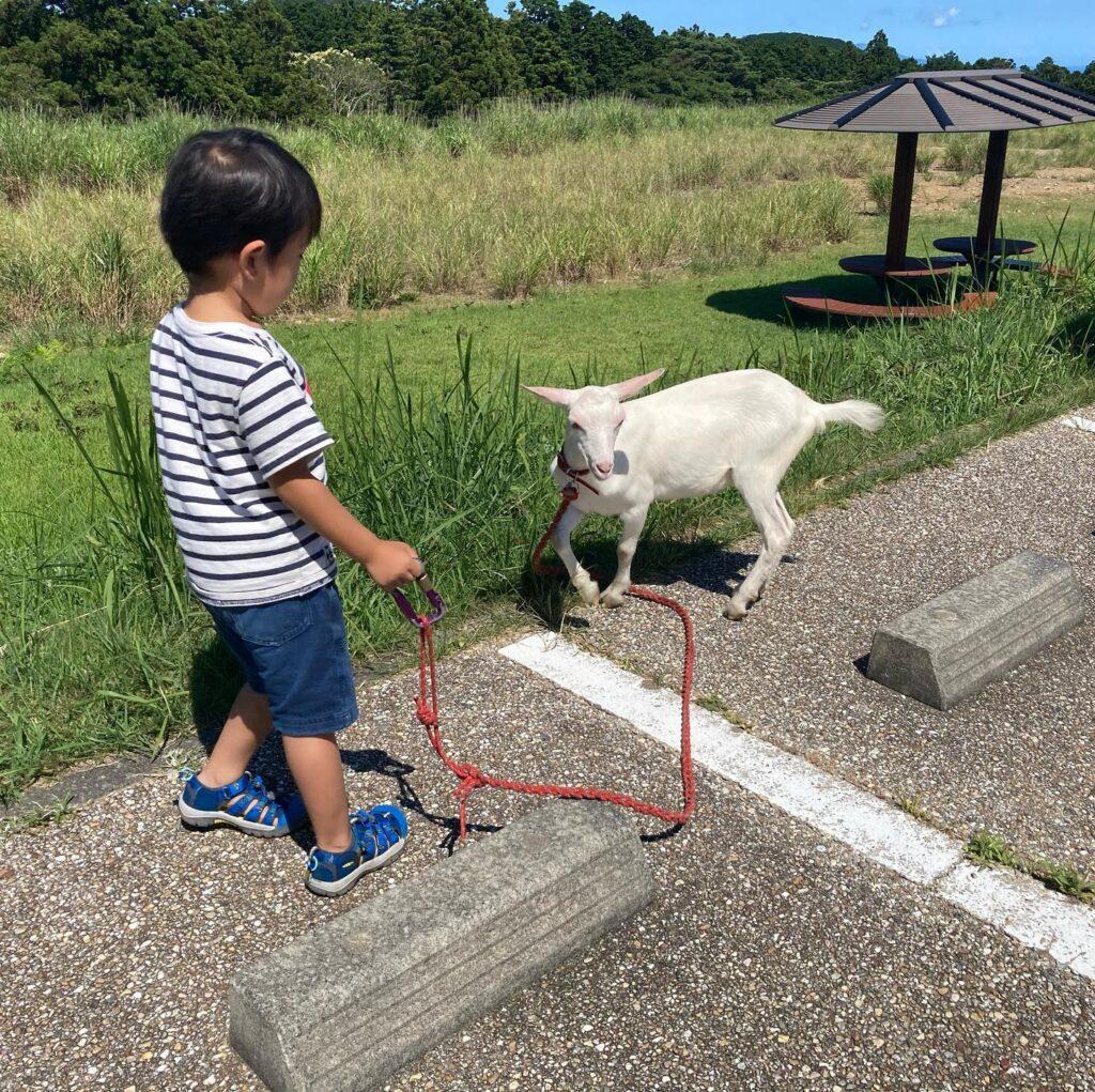 細野高原ツリーハウスで山羊と触れ合う男の子