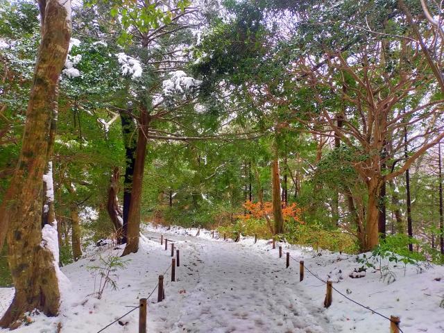 雪の積もった森の道